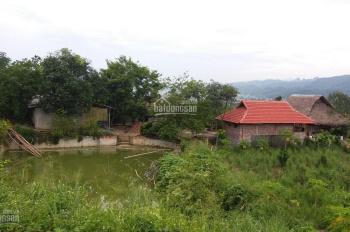 Cần bán trang trại lớn tại xã Thống Nhất Phường Đồng Tiến