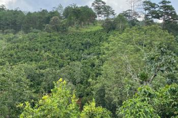 5000 m2 chính chủ đất nông nghiệp xã Xuân Trường, Đà Lạt đường ô tô tận vườn