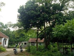 Khuôn viên 3000m2 ở Lương Sơn giá chỉ hơn 1 tỷ