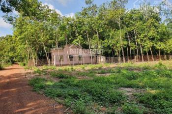 Bán gấp lô đất ngay khu công nghiệp Bàu Bàng, DT 200m2 giá 600tr SHR TC