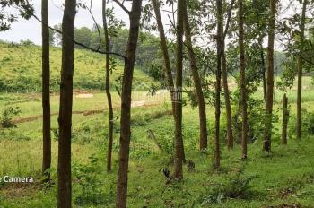 8000m2 có 1200m2 đất ở view cánh đồng giá rẻ tại Lương Sơn Hòa Bình