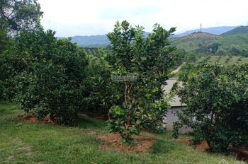 Bán mảnh vườn chính chủ 1,2ha cải tạo đẹp đang thu hoạch 500 cây cam xen bưởi