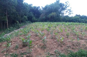 Chuyển nhượng gấp 1600m2 đất thổ cư nhà vườn ở Nhuận Trạch, Lương Sơn HB phẳng lỳ, vuông góc
