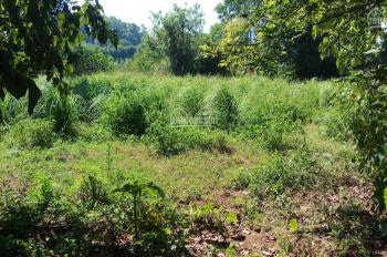 Cần bán 1,25ha đất vườn trong đó có 500m2 đất ở