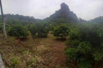 4000m bán núi đá ở Lương Sơn giá chỉ 2 tỷ. LH 0917.366.060