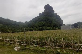4000m2 bán núi đá ở Lương Sơn giá chỉ 2 tỷ. LH 0352066978/ 0943346523