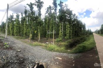 Cần bán 1 sào xã Suối Cao, diện tích: 1000m2, đất đang trồng tiêu, mặt tiền đường đá mi