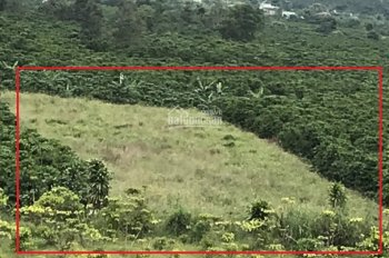 Đất sào view cực đẹp 2300m2, chân núi Xà Bum, Lộc Châu, TP Bảo Lộc, Lâm Đồng. SHR, 1 tỷ 800tr
