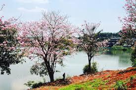 Đất nền biệt thự nghỉ dưỡng SHR Bảo Lộc-Lâm Đồng 8x20 view thác Dambri. Liên hệ: 0931154316