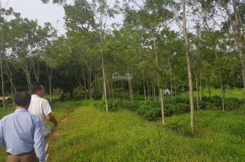 Cần bán 1,1ha thổ cư ao vườn, thế đất đẹp nhiều cây xanh, gần sân Golf Sky Lake Liên Sơn, Hòa Bình