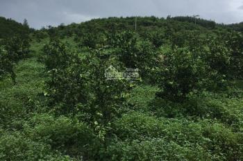 Bán 9ha rẫy trang trại Khánh Vĩnh