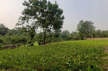 Chính chủ cần chuyển nhượng chuyển nhượng 3500m2 đất thổ cư Lương Sơn