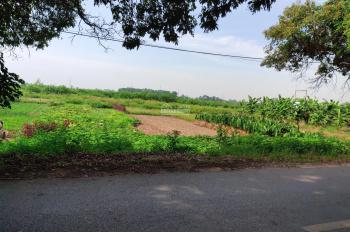 Bán đất canh tác tại đường Rặng Nhãn, Hiệp Thuận, Phúc Thọ, Hà Nội