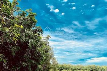 Đất Long Thành 1 Sẹt đường Phước Bình ngay KCN Phước Bình dt 1000m2 giá 1,5tr/m2 Lh 0935.327.166