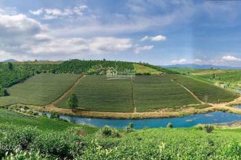 Bảo Lộc Park Hills 4F - thiên đường nghỉ dưỡng - sổ hồng riêng từng nền