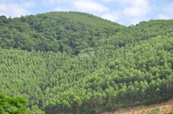 Đất rừng giá chỉ từ 15-18k/m2, cam kết lợi nhuận 20-40%/năm