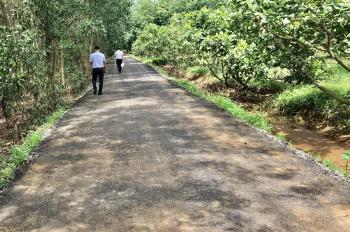 cần bán 1 ha vườn điều đối diện KCN xã Phước Bình Long Thành, cách khu tái định cư Phước Bình 1,3km