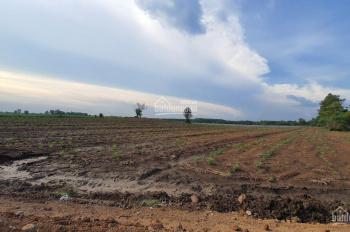 Cần bán gấp 2 hecta đất Đông Hòa, mặt tiền đường nhựa 150m