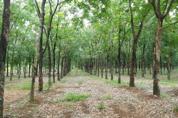 16.7ha đất quy hoạch được phép làm trang trại Lộc Ninh