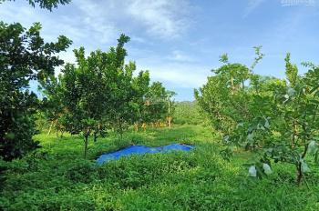 Hot! Gia đình cần bán gấp 1,8ha đất đẹp giá rẻ có thể làm trang trại khu nghỉ dưỡng