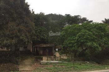 Bán gấp nhà cũ và ao cá ngay cạnh Achi Resort