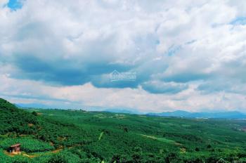 (View Đồi - Trung Tâm TP Bảo Lộc) - 505m2/560 triệu - SHR - View săn mây cực đẹp - 0917137162