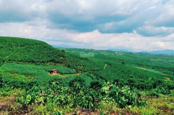Đất DT lớn view đồi, suối thơ mộng ngay sát trung tâm TP giá chỉ 1tr/m2. Chính chủ bán miễn TG