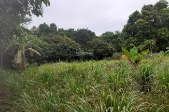 Chuyển nhượng gấp lô đất 5530m2 xây nhà vườn, biệt thự nghỉ dưỡng tại Lương Sơn, Hòa Bình