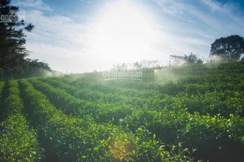 Bán đất cạnh khu du lịch Hưng Thịnh Bảo Lộc,MT 26m,giá siêu rẻ 3,5tr/m2, cách QL 1,5km 0938.048.240