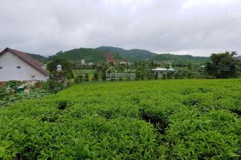 Bán 4207m2 đất trồng chè, có hồ, view cực đẹp, Đại Lào, Bảo Lộc, Lâm Đồng, 2tỷ200tr