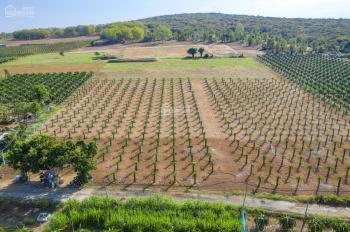 Đất Bắc Bình Farm Stay, giá tốt để đầu tư ngay hôm nay chỉ với 50.000/m2. LH 0566666688