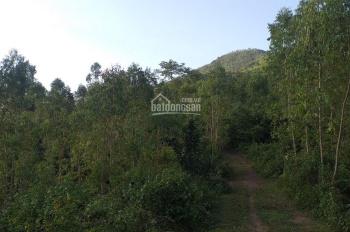Cần bán đất rừng sản xuất giá rẻ 15891m2 chỉ 2 tỷ vnđ tại Lâm Sơn, Hòa Bình