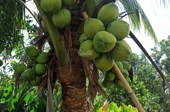 Nhượng rẻ gấp nhà vườn + bưởi, sầu riêng đẹp tại Đồng Nai