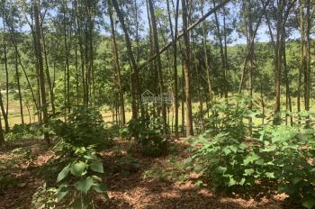 Bán 8000m2 đất tại Lương Sơn, Hòa Bình, giá cả hợp lý