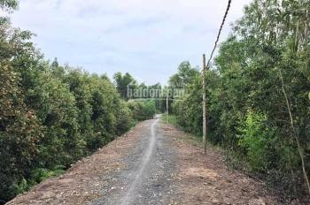 Cần bán gấp đất vườn Bến Lức, Long An, DT 1267m2 giá 360 nghìn/m2