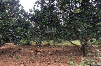 Bán gấp 2250m2 đất thổ cư huyện Lương Sơn, giá rẻ