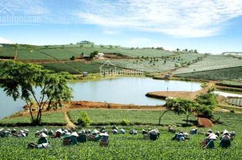 Bán đất trồng trà trả nợ ngân hàng, thích hợp nghỉ dưỡng - bán gấp