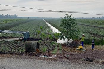 Bán đất trồng khóm thuộc huyện Tân Phước - Tiền Giang