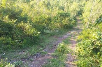 Cực rẻ 8,3ha đất rừng sản xuất ở Lương Sơn Hòa Bình chỉ 2 tỷ