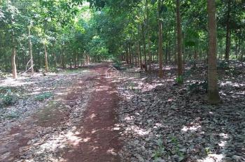 Bán đất vườn cao su tại xã Tân Hòa, huyện Đồng Phú, Bình Phước diện tích 123 ha