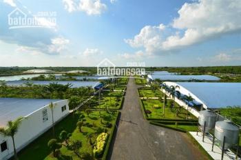 Bán trang trại công nghệ cao, nuôi 10.000 con heo hậu bị, diện tích gần 10ha