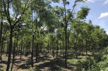 Chính chủ thanh lý đất vườn và tài sản trên đất
