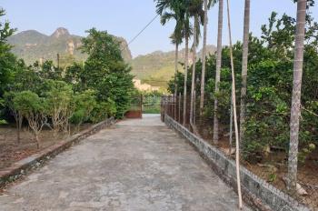 Bán gấp lô đất 2500m2 đẹp tại Lương Sơn, Hoà Bình