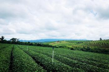 Cần bán đất sào, đất vườn được lên thổ cư, DT 1000m2 giá 1.2 tỷ, cách đường QL 1km, gần cf Mê Linh