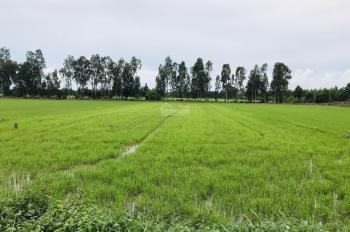 Bán đất mặt tiền Quốc lộ 61C đoạn 10 Ngàn Rưỡi - giá 540tr/công