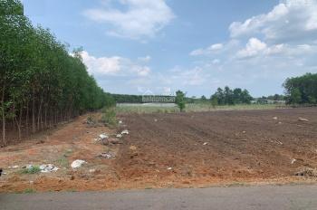Chính chủ cần bán 1000m2 đất mặt tiền QL13, giá 300 triệu. LH: 0389245867