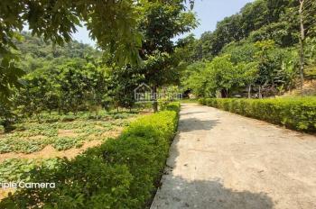 Bán gấp biệt thự 1.6ha view tuyệt đẹp tránh dịch Covid - 19 tại Lương Sơn Hòa Bình