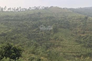 Cần bán 15ha đất Lương Sơn, Hoà Bình, đã trồng sẵn rất nhiều cây ăn quả, giá hạt rẻ