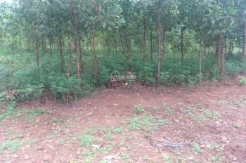 Cần bán 9000m2 đất Cư Yên, Lương Sơn, Hoà Bình tuyệt đẹp