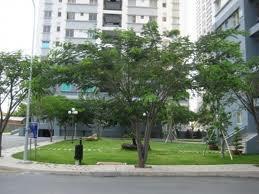 Căn hộ duplex penthouse Nhà Bè